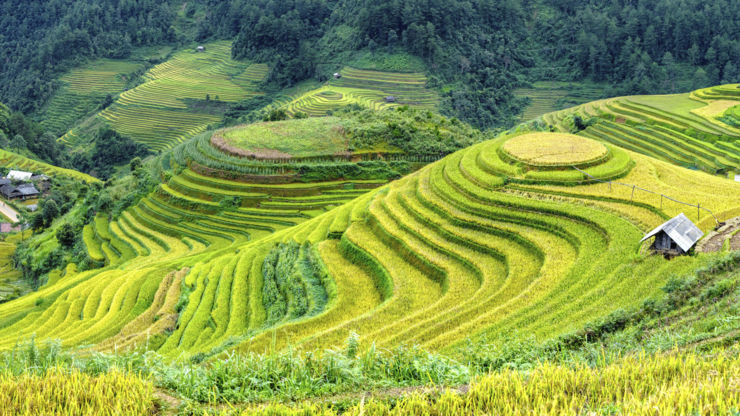 Mu Cang Chai rice terrace in Vietnam