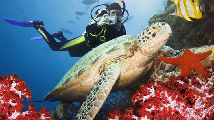 Turtle and Scuba Diver in Red Sea, Egypt