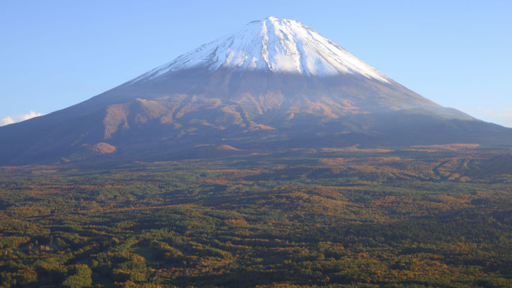 A view of the Suicide Forest in Japan with Mt Fuji overlooking it in the background.
